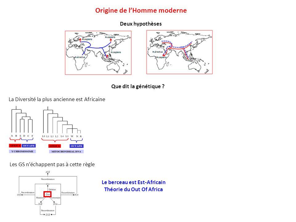 Deux hypothèses Origine de lHomme moderne Que dit la génétique ? La Diversité la plus ancienne est Africaine Les GS néchappent pas à cette règle Le be