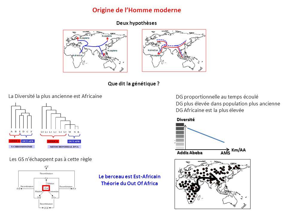 Deux hypothèses Origine de lHomme moderne Que dit la génétique ? La Diversité la plus ancienne est Africaine Les GS néchappent pas à cette règle DG pr