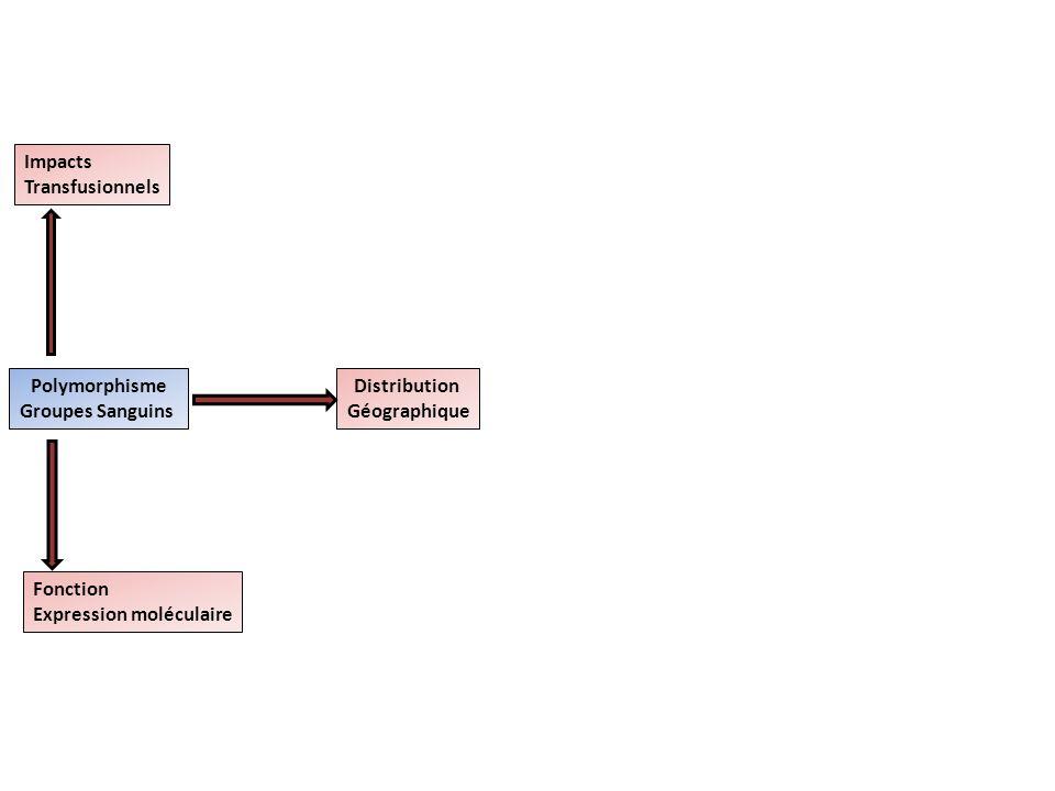 Polymorphisme Groupes Sanguins Impacts Transfusionnels Fonction Expression moléculaire Distribution Géographique