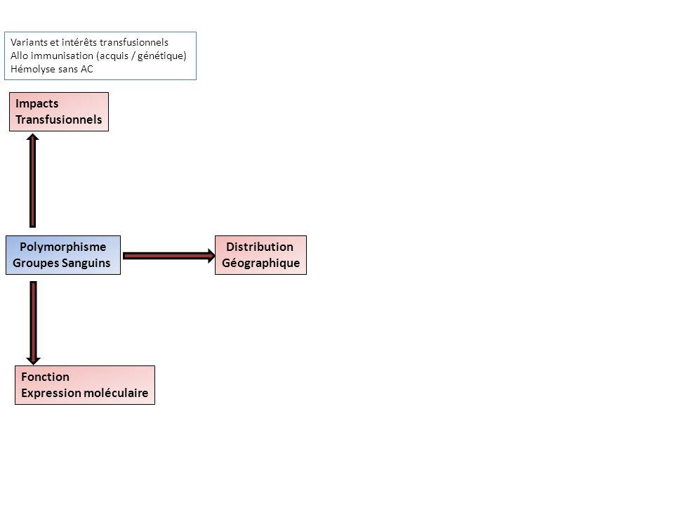 Polymorphisme Groupes Sanguins Impacts Transfusionnels Fonction Expression moléculaire Distribution Géographique Variants et intérêts transfusionnels