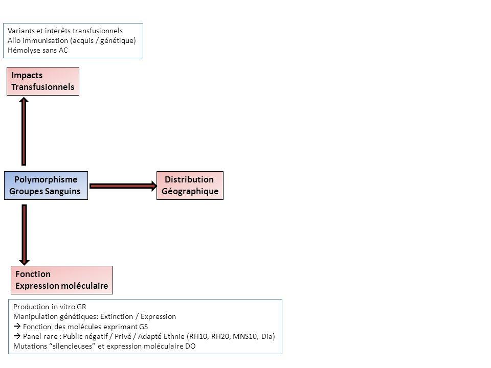 Polymorphisme Groupes Sanguins Impacts Transfusionnels Fonction Expression moléculaire Distribution Géographique Production in vitro GR Manipulation g