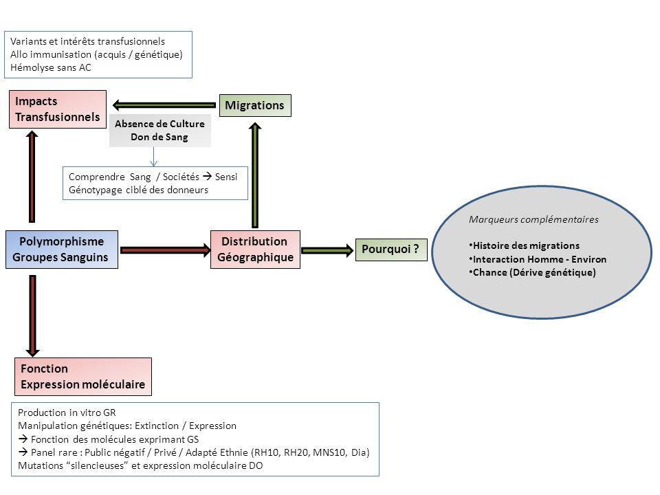 Polymorphisme Groupes Sanguins Impacts Transfusionnels Fonction Expression moléculaire Distribution Géographique Pourquoi .