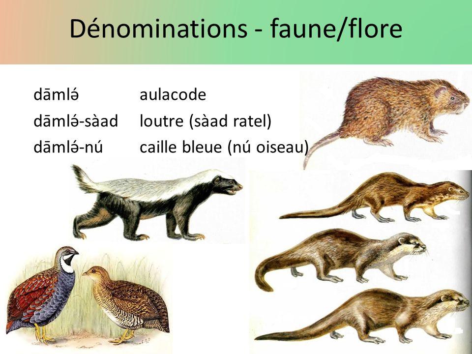 Dénominations - faune/flore dāmlə́aulacode dāmlə́-sàadloutre (sàad ratel) dāmlə́-núcaille bleue(nú oiseau)