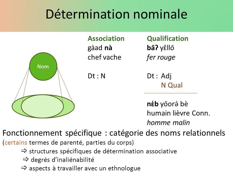 Détermination nominale Nom AssociationQualification gàad nàbāʔ yɛ̌llō chef vachefer rouge Dt : NDt :Adj N Qual nɛ́b yōorə̀ bè humain lièvre Conn.