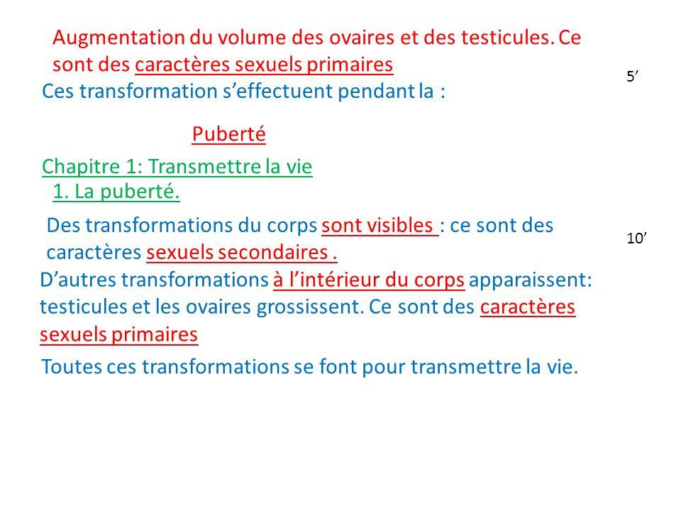 Augmentation du volume des ovaires et des testicules. Ce sont des caractères sexuels primaires Ces transformation seffectuent pendant la : Puberté Cha
