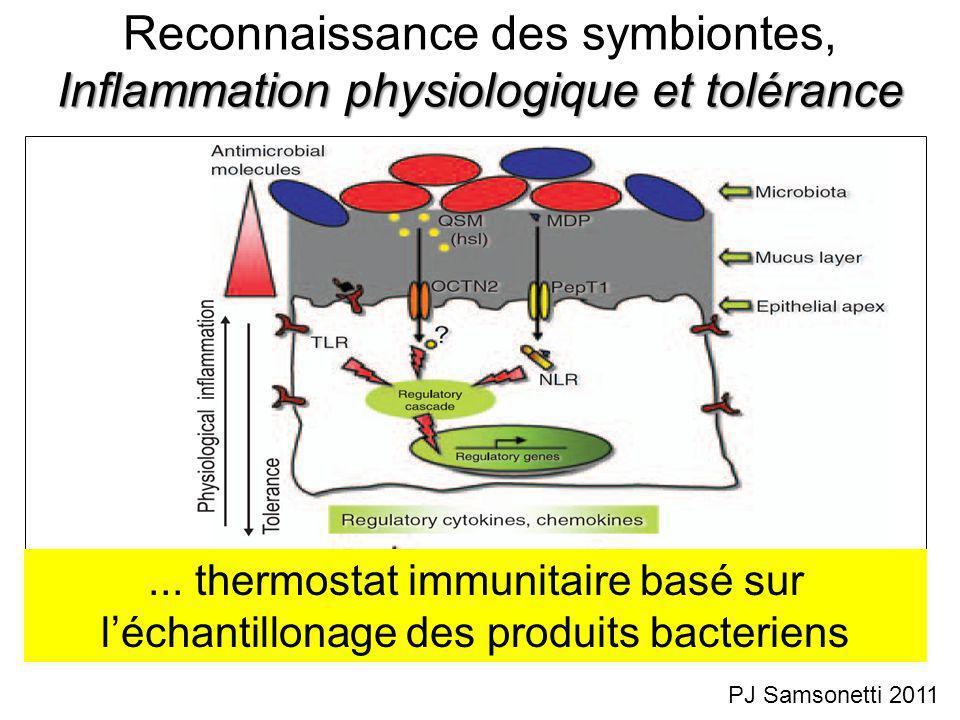 Inflammation physiologique et tolérance Reconnaissance des symbiontes, Inflammation physiologique et tolérance PJ Samsonetti 2011...