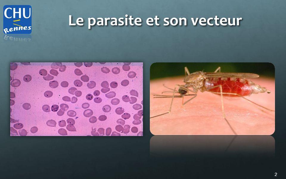 3 Plasmodium Parasite protozoaire 4 espèces principales: P.