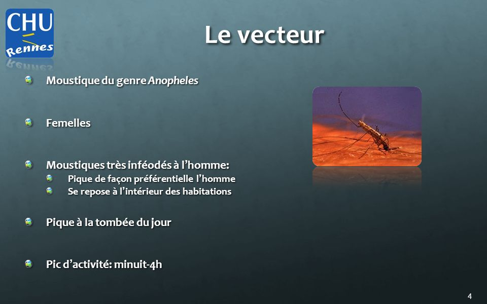 4 Le vecteur Moustique du genre Anopheles Femelles Moustiques très inféodés à l homme: Pique de façon préférentielle l homme Se repose à l intérieur d