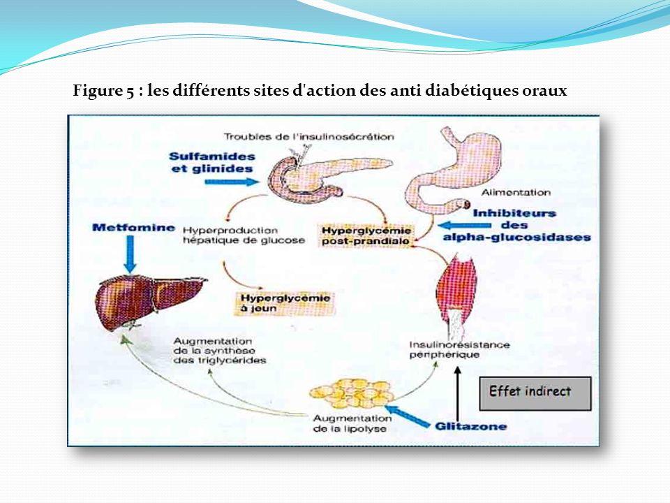Figure 5 : les différents sites d'action des anti diabétiques oraux