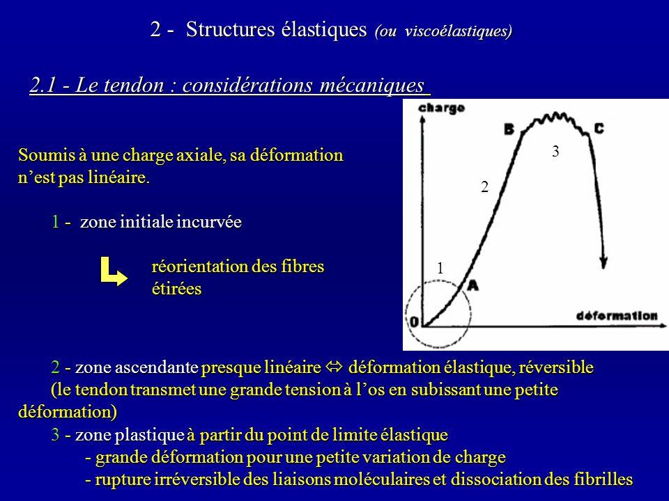 2.1 - Le tendon : considérations mécaniques 2 - zone ascendante presque linéaire déformation élastique, réversible (le tendon transmet une grande tension à los en subissant une petite déformation) 3 - zone plastique à partir du point de limite élastique - grande déformation pour une petite variation de charge - rupture irréversible des liaisons moléculaires et dissociation des fibrilles 2 - Structures élastiques (ou viscoélastiques) 1 2 3 Soumis à une charge axiale, sa déformation nest pas linéaire.