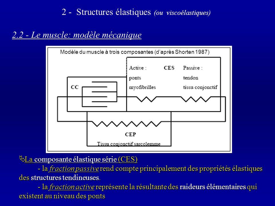 2.2 - Le muscle: modèle mécanique La composante élastique série (CES) La composante élastique série (CES) - la fraction passive rend compte principalement des propriétés élastiques des structures tendineuses.