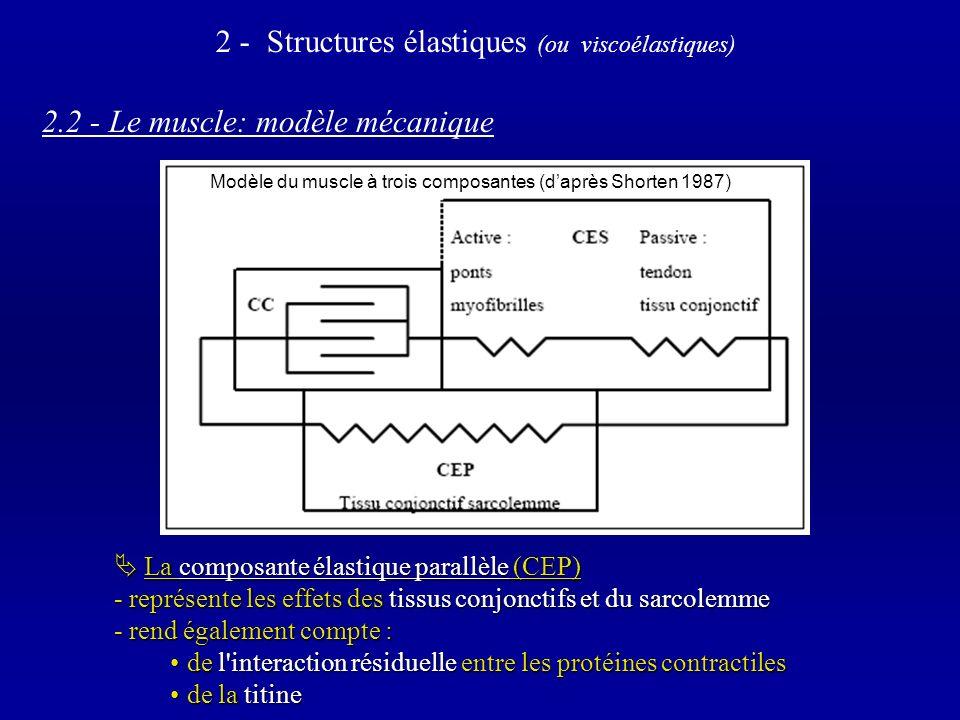 2.2 - Le muscle: modèle mécanique La composante élastique parallèle (CEP) La composante élastique parallèle (CEP) - représente les effets des tissus conjonctifs et du sarcolemme - rend également compte : de l interaction résiduelle entre les protéines contractiles de l interaction résiduelle entre les protéines contractiles de la titine de la titine 2 - Structures élastiques (ou viscoélastiques) Modèle du muscle à trois composantes (daprès Shorten 1987)