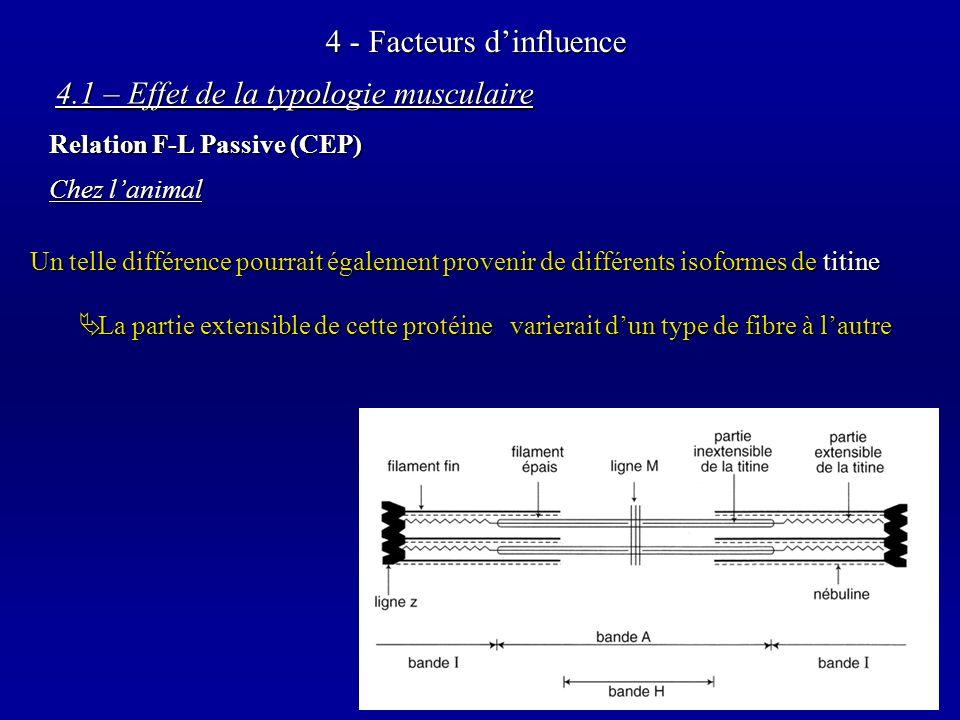 4 - Facteurs dinfluence Chez lanimal Un telle différence pourrait également provenir de différents isoformes de titine La partie extensible de cette protéine varierait dun type de fibre à lautre La partie extensible de cette protéine varierait dun type de fibre à lautre 4.1 – Effet de la typologie musculaire Relation F-L Passive (CEP)