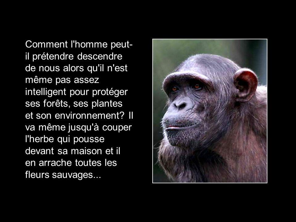 Tu crois que pour la sauvegarde de la planète on devrait mettre tous les hommes en cage? Il faudra en parler au grand conseil simiesque.