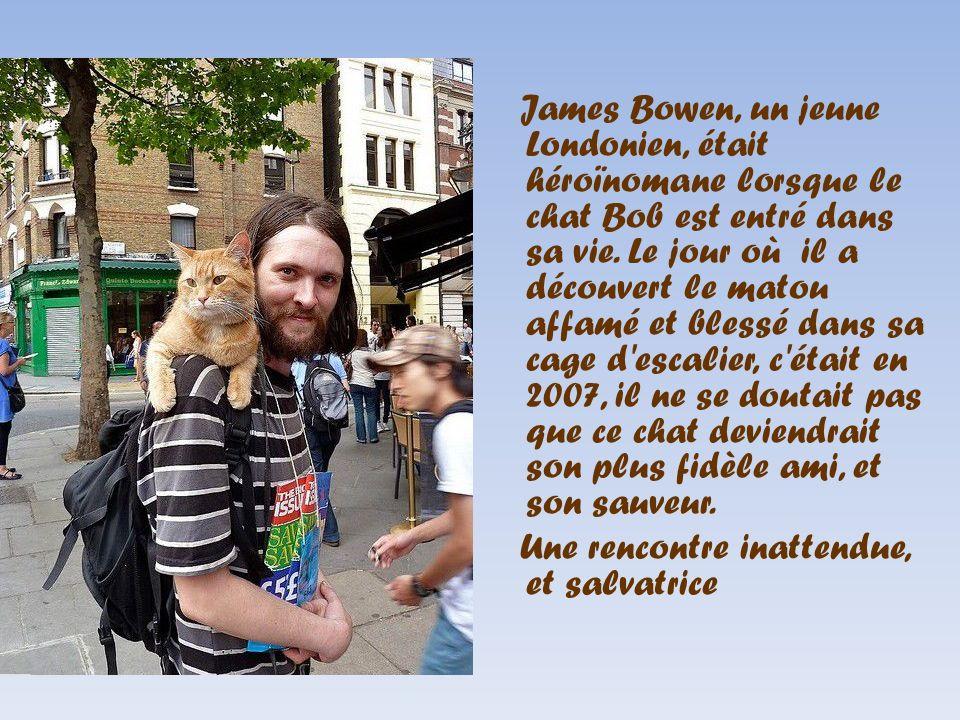 James Bowen, un jeune Londonien, était héroïnomane lorsque le chat Bob est entré dans sa vie. Le jour où il a découvert le matou affamé et blessé dans
