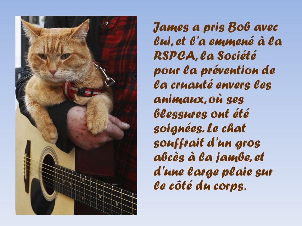 James a pris Bob avec lui, et l'a emmené à la RSPCA, la Société pour la prévention de la cruauté envers les animaux, où ses blessures ont été soignées