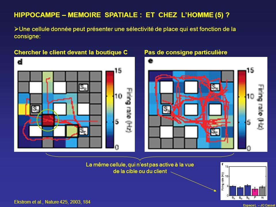 Espace L – JC Cassel HIPPOCAMPE – MEMOIRE SPATIALE : ET CHEZ LHOMME (5) ? Une cellule donnée peut présenter une sélectivité de place qui est fonction