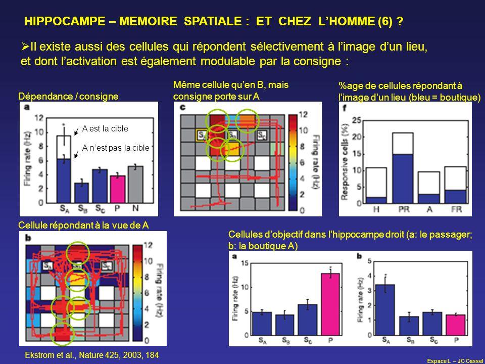 Espace L – JC Cassel HIPPOCAMPE – MEMOIRE SPATIALE : ET CHEZ LHOMME (6) ? Il existe aussi des cellules qui répondent sélectivement à limage dun lieu,