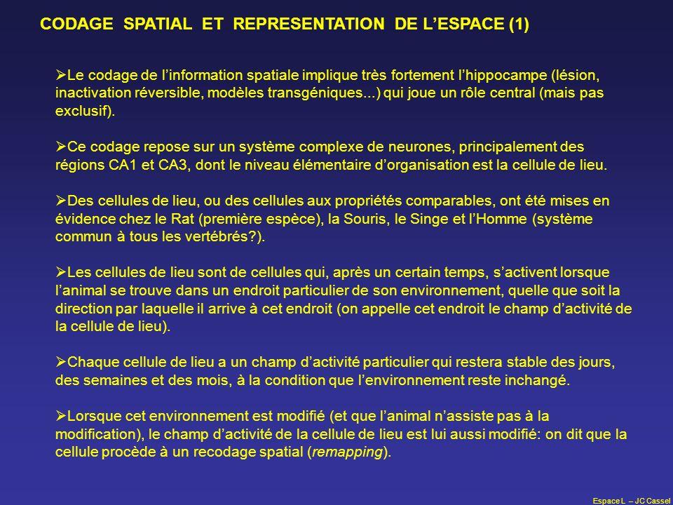 Espace L – JC Cassel Le codage de linformation spatiale implique très fortement lhippocampe (lésion, inactivation réversible, modèles transgéniques...