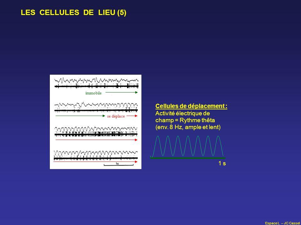 Espace L – JC Cassel LES CELLULES DE LIEU (5) immobile se déplace Cellules de déplacement : Activité électrique de champ = Rythme thêta (env. 8 Hz, am