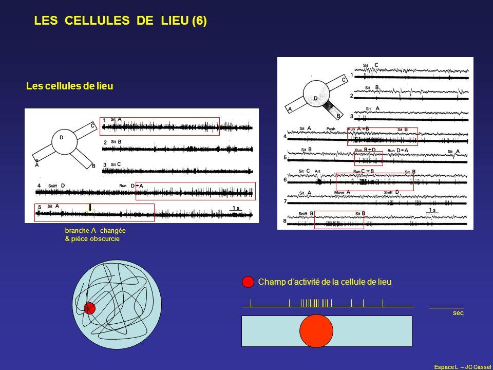 Espace L – JC Cassel LES CELLULES DE LIEU (6) branche A changée & pièce obscurcie Les cellules de lieu Champ dactivité de la cellule de lieu sec