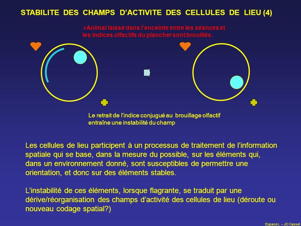 Espace L – JC Cassel STABILITE DES CHAMPS DACTIVITE DES CELLULES DE LIEU (4) Animal laissé dans lenceinte entre les séances et les indices olfactifs d
