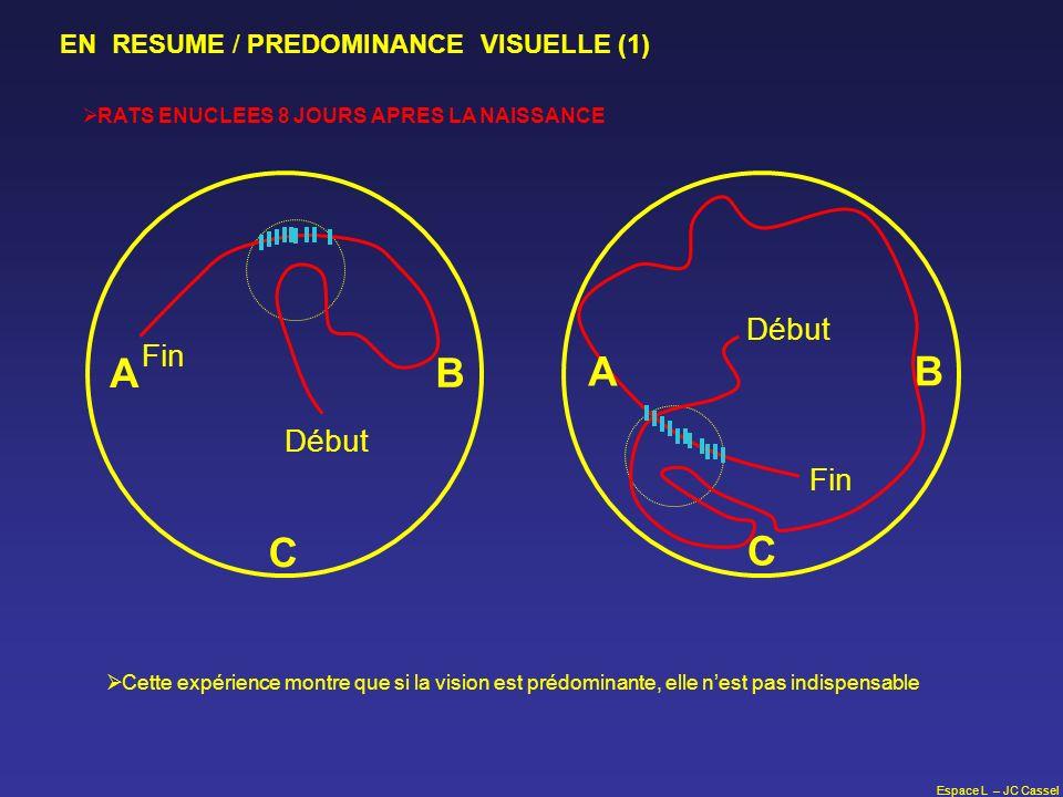 Espace L – JC Cassel A B C Début Fin RATS ENUCLEES 8 JOURS APRES LA NAISSANCE EN RESUME / PREDOMINANCE VISUELLE (1) B C Fin Début A Cette expérience m