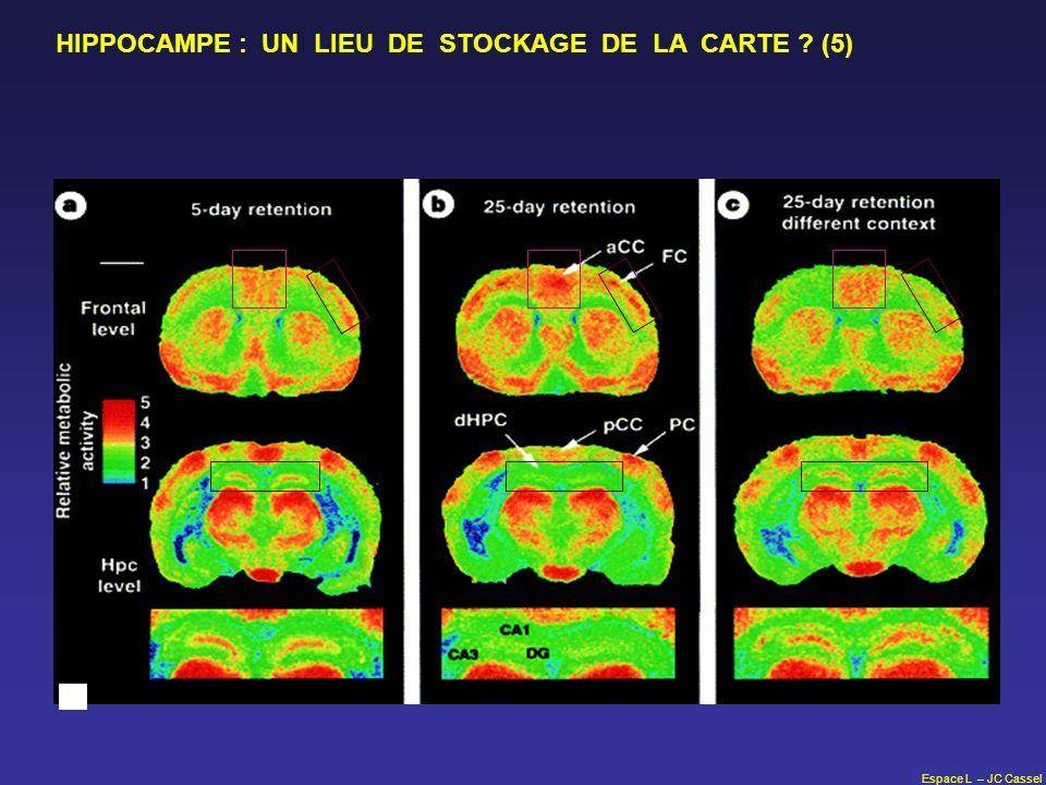 Espace L – JC Cassel HIPPOCAMPE : UN LIEU DE STOCKAGE DE LA CARTE ? (5)