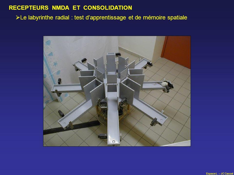 Espace L – JC Cassel RECEPTEURS NMDA ET CONSOLIDATION Le labyrinthe radial : test dapprentissage et de mémoire spatiale