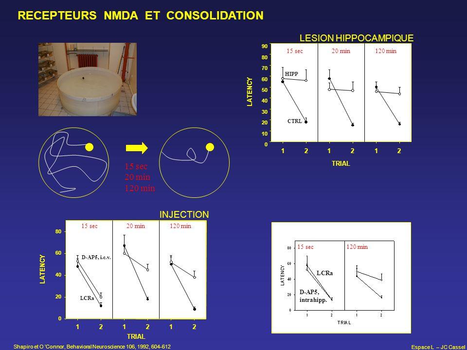 Espace L – JC Cassel RECEPTEURS NMDA ET CONSOLIDATION TRIAL LATENCY 0 10 20 30 40 50 60 70 80 90 15 sec120 min20 min CTRL HIPP 122 2 11 LESION HIPPOCA