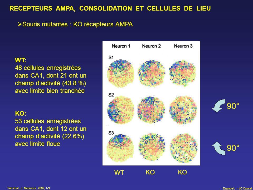 Espace L – JC Cassel RECEPTEURS AMPA, CONSOLIDATION ET CELLULES DE LIEU Souris mutantes : KO récepteurs AMPA WT KO 90° WT: 48 cellules enregistrées da