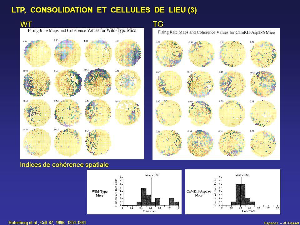 Espace L – JC Cassel Rotenberg et al., Cell 87, 1996, 1351-1361 LTP, CONSOLIDATION ET CELLULES DE LIEU (3) WT TG Indices de cohérence spatiale