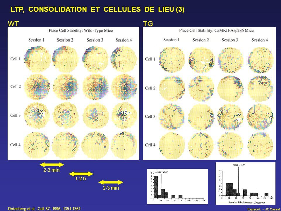 Espace L – JC Cassel Rotenberg et al., Cell 87, 1996, 1351-1361 LTP, CONSOLIDATION ET CELLULES DE LIEU (3) WT TG 2-3 min 1-2 h