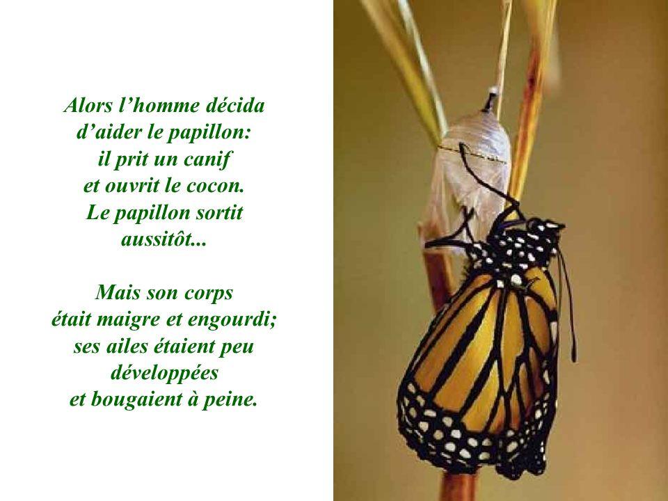 Alors lhomme décida daider le papillon: il prit un canif et ouvrit le cocon. Le papillon sortit aussitôt... Mais son corps était maigre et engourdi; s