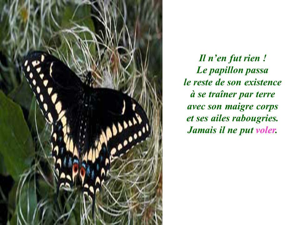 Il nen fut rien ! Le papillon passa le reste de son existence à se traîner par terre avec son maigre corps et ses ailes rabougries. Jamais il ne put v