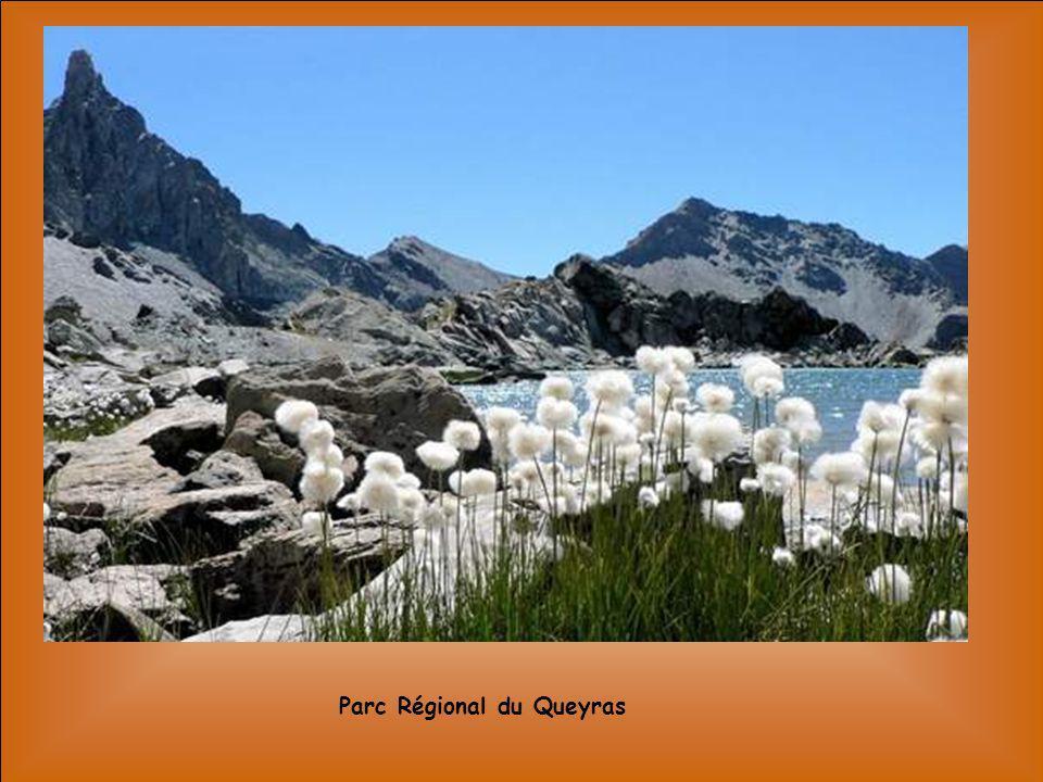 Les Grandes Jorasses – Mont Blanc -