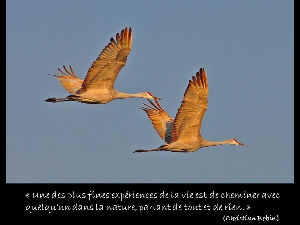 « Il ny a que lamour qui nous rende à nous-mêmes. » (A. Camus)