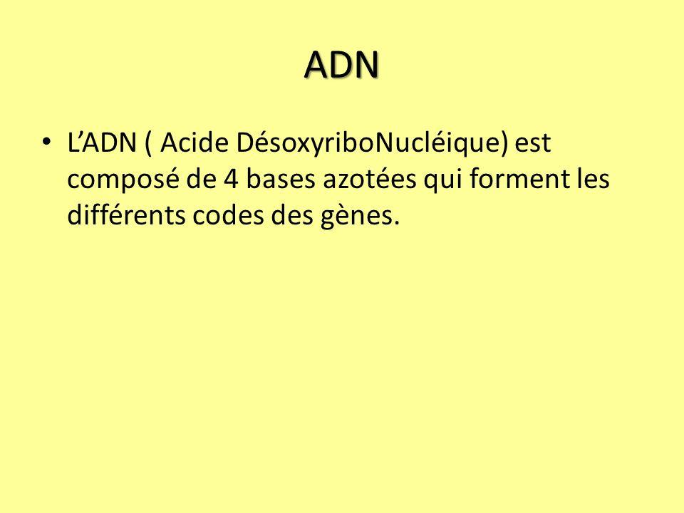 ADN LADN ( Acide DésoxyriboNucléique) est composé de 4 bases azotées qui forment les différents codes des gènes.