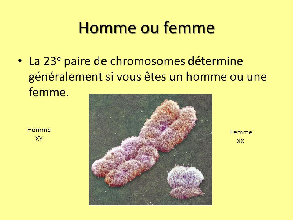 Homme ou femme La 23 e paire de chromosomes détermine généralement si vous êtes un homme ou une femme.