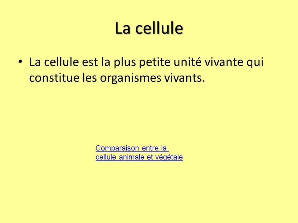 La cellule La cellule est la plus petite unité vivante qui constitue les organismes vivants.