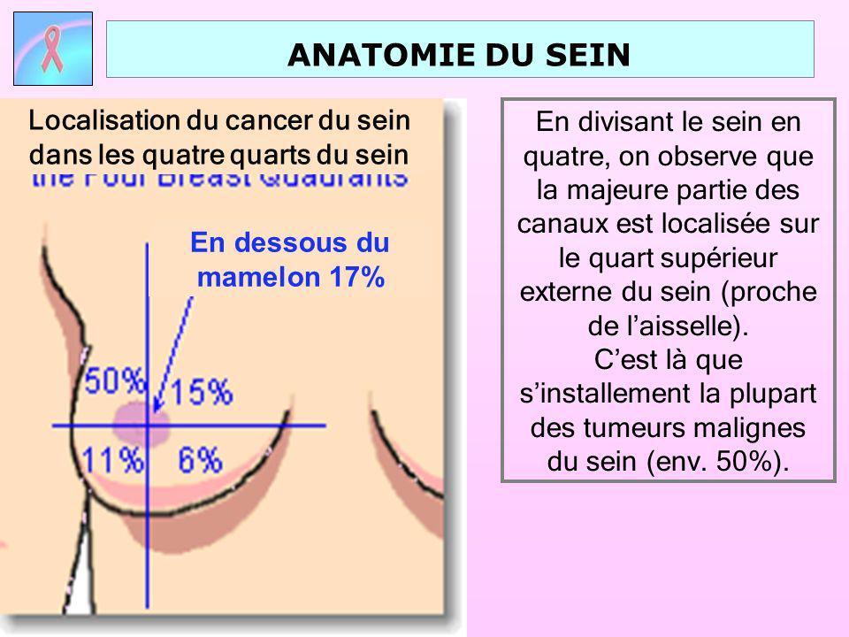 ANATOMIE DU SEIN CÔTES ET MUSCLES PECTORAUX Le sein est constitué par des glandes, des conduits, des tissus graisseux et musculaires.