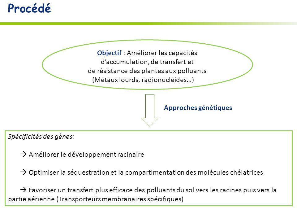 Spécificités des gènes: Améliorer le développement racinaire Optimiser la séquestration et la compartimentation des molécules chélatrices Favoriser un transfert plus efficace des polluants du sol vers les racines puis vers la partie aérienne (Transporteurs membranaires spécifiques) Approches génétiques Objectif : Améliorer les capacités daccumulation, de transfert et de résistance des plantes aux polluants (Métaux lourds, radionucléides…) …) Procédé