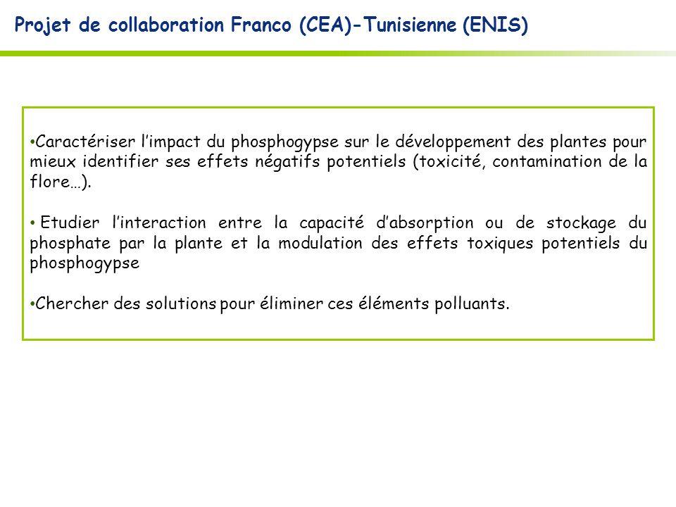 Projet de collaboration Franco (CEA)-Tunisienne (ENIS) Caractériser limpact du phosphogypse sur le développement des plantes pour mieux identifier ses effets négatifs potentiels (toxicité, contamination de la flore…).