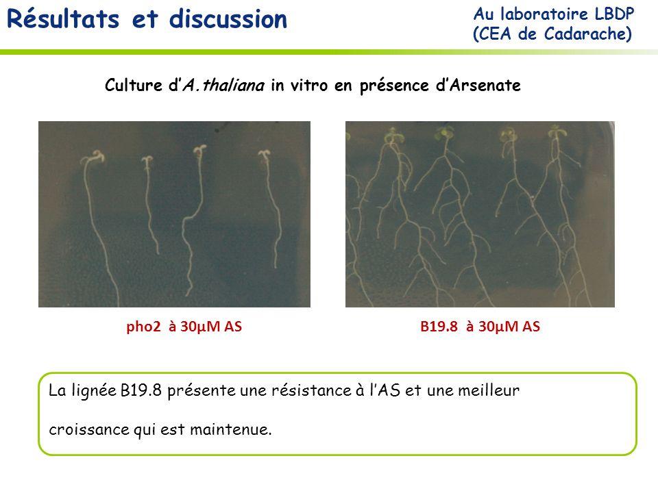 Résultats et discussion pho2 à 30µM ASB19.8 à 30µM AS La lignée B19.8 présente une résistance à lAS et une meilleur croissance qui est maintenue.