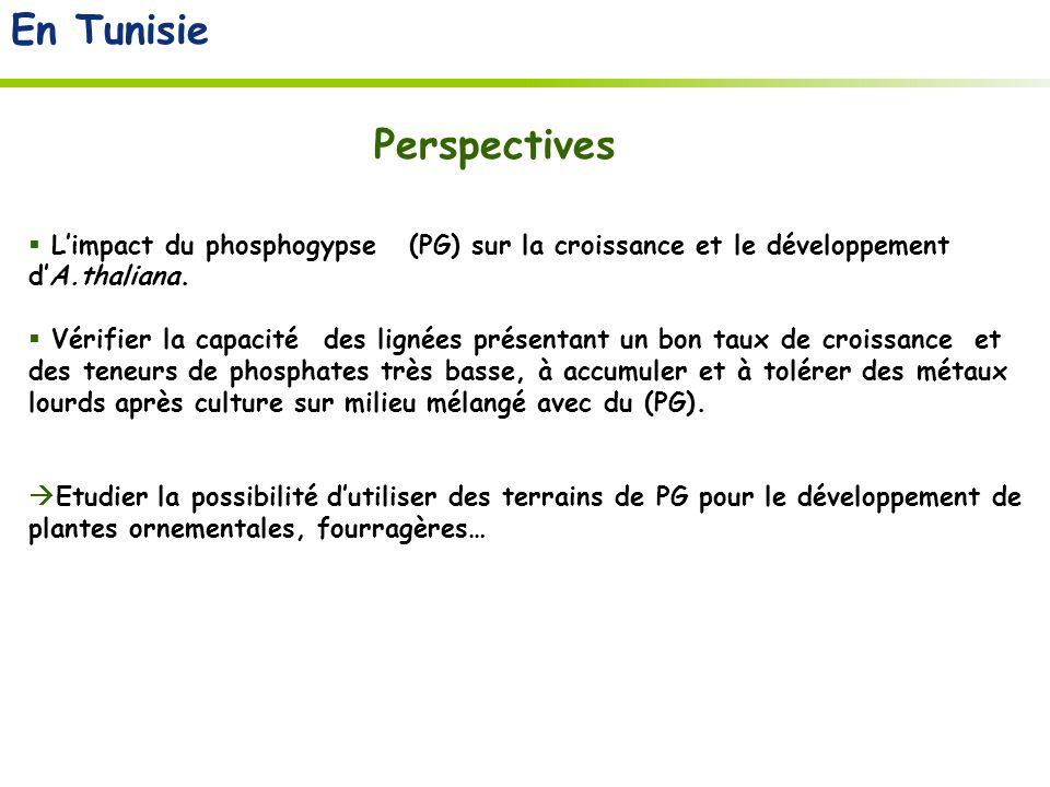 En Tunisie Limpact du phosphogypse (PG) sur la croissance et le développement dA.thaliana.