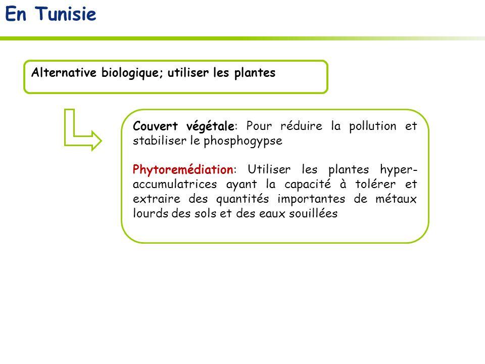 La modification de la quantité de phosphate à lintérieur de la plante pourrait altérer laccumulation des métaux lourds.