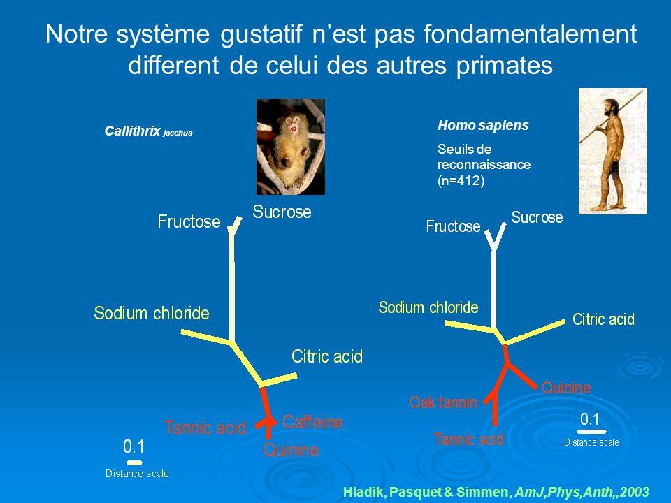 Notre système gustatif nest pas fondamentalement different de celui des autres primates Hladik, Pasquet & Simmen, AmJ,Phys,Anth,,2003 Callithrix jacch