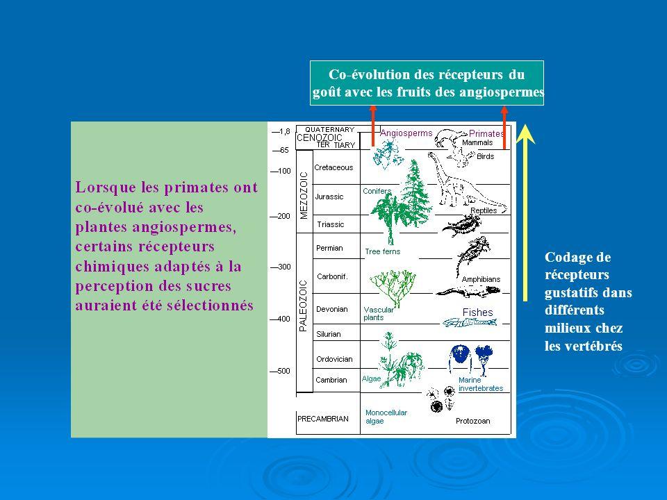 Co-évolution des récepteurs du goût avec les fruits des angiospermes Codage de récepteurs gustatifs dans différents milieux chez les vertébrés