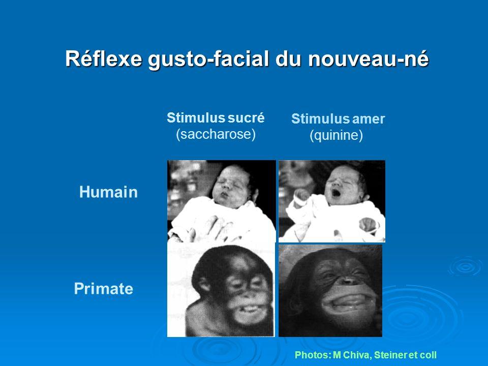 Réflexe gusto-facial du nouveau-né Stimulus sucré (saccharose) Stimulus amer (quinine) Primate Humain Photos: M Chiva, Steiner et coll