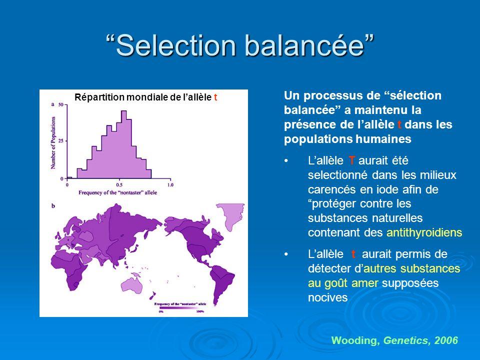 Selection balancée Wooding, Genetics, 2006 Un processus de sélection balancée a maintenu la présence de lallèle t dans les populations humaines Lallèl